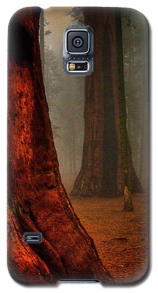 Sequoias In The Clouds Galaxy S5 Case