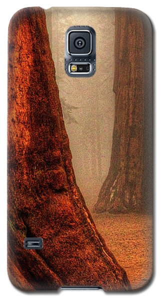 Sequoias Touching The Clouds Galaxy S5 Case