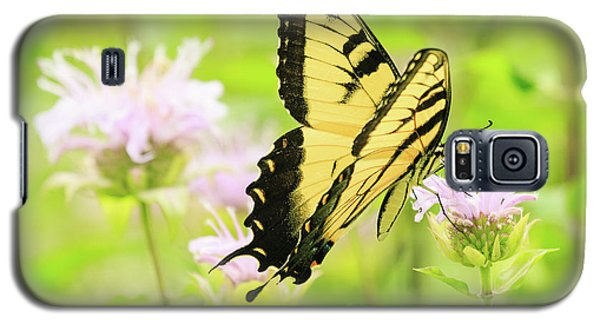 Series Of Yellow Swallowtail #4 Of 6 Galaxy S5 Case