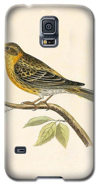 Serin Finch Galaxy S5 Case by English School
