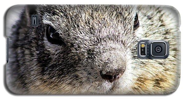 Serious Squirrel Galaxy S5 Case