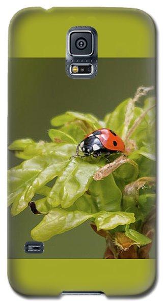 Seven Spots In A Crown Of Oak Galaxy S5 Case