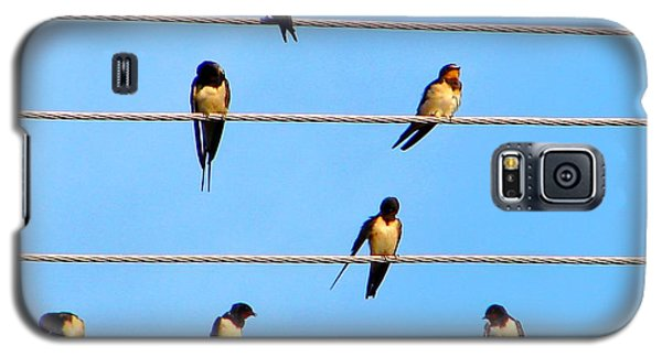 Galaxy S5 Case featuring the photograph Seven Swallows by Ana Maria Edulescu