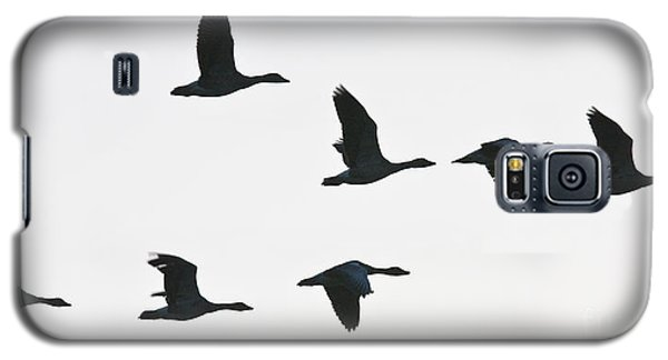 Sevenfold Geese Galaxy S5 Case