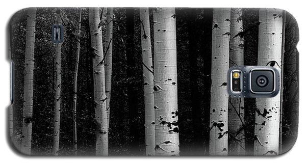Galaxy S5 Case featuring the photograph Shades Of A Forest by James BO Insogna
