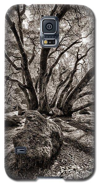 Shadow Tree Galaxy S5 Case