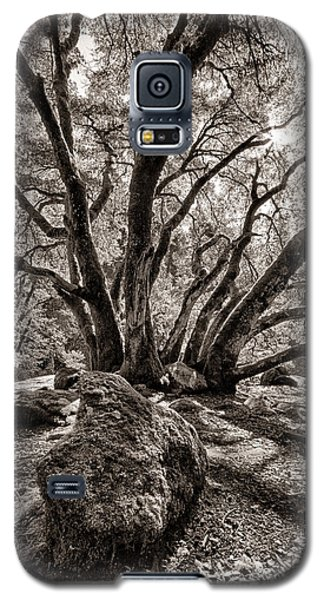 Shadow Tree Galaxy S5 Case