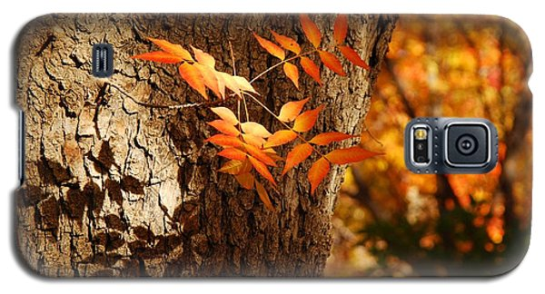 Fall Color Galaxy S5 Case by Tam Ryan