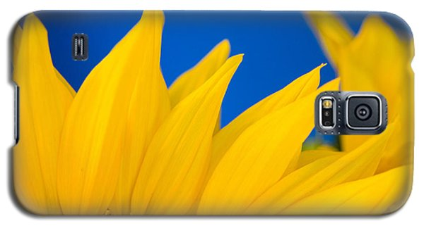 Shady Shy Sunflowers Galaxy S5 Case