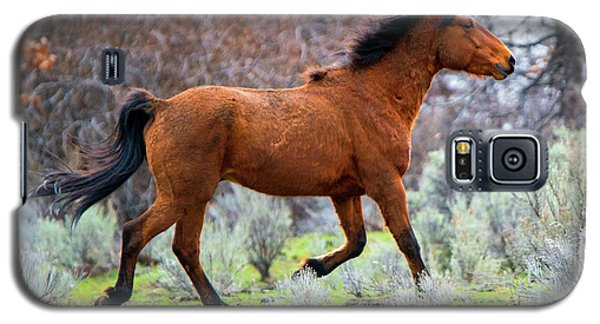 Galaxy S5 Case featuring the photograph Shaggy And Proud by Mike Dawson
