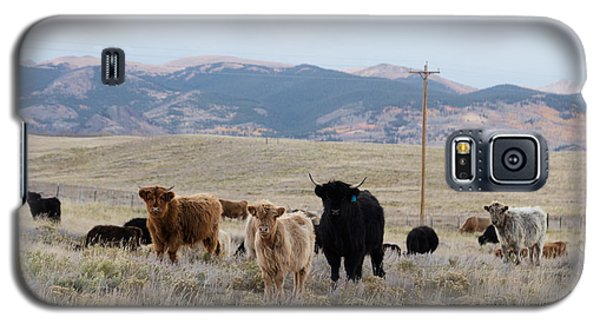Galaxy S5 Case featuring the photograph Shaggy-coated Cattle Near Jefferson by Carol M Highsmith