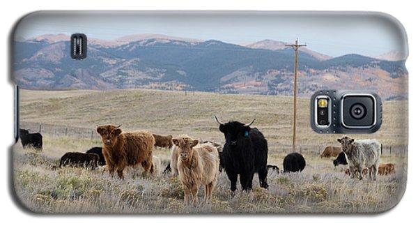 Shaggy-coated Cattle Near Jefferson Galaxy S5 Case