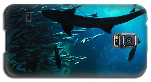 Galaxy S5 Case featuring the photograph Shark Above by Carl Purcell