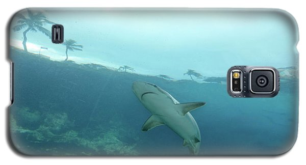Shark Attack Galaxy S5 Case