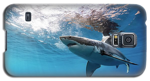 Shark Rays Galaxy S5 Case by Shane Linke