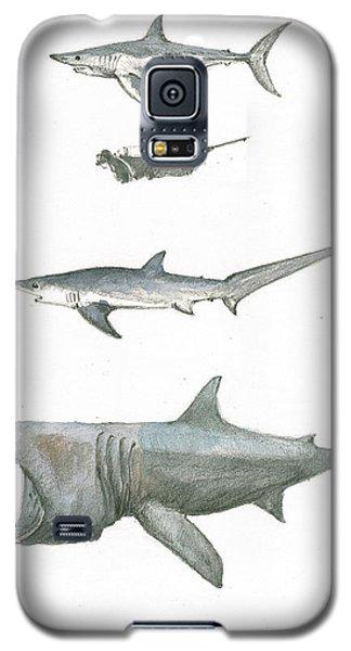 Nurse Shark Galaxy S5 Case - Sharks In The Deep Ocean by Juan Bosco