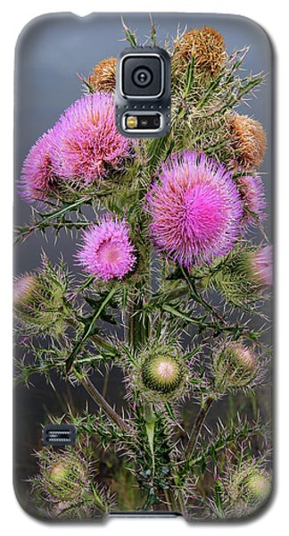 Sharp Thistle Galaxy S5 Case