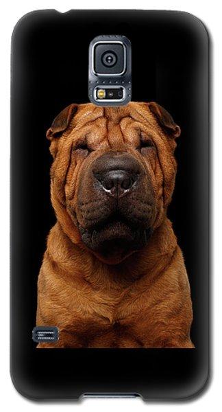 Sharpei Dog Isolated On Black Background Galaxy S5 Case
