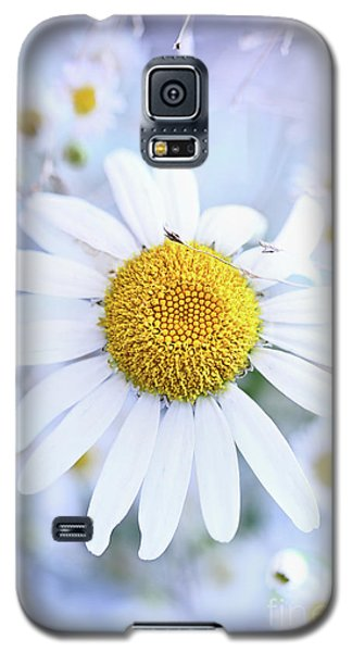 Galaxy S5 Case featuring the photograph Shasta Daisy by Stephanie Frey