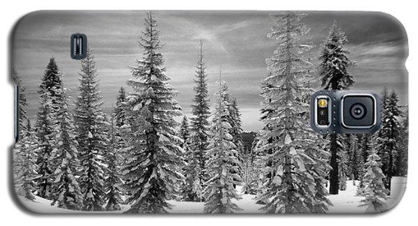 Shasta Snowtrees Galaxy S5 Case by Martin Konopacki