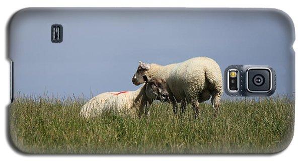 Sheep 4221 Galaxy S5 Case