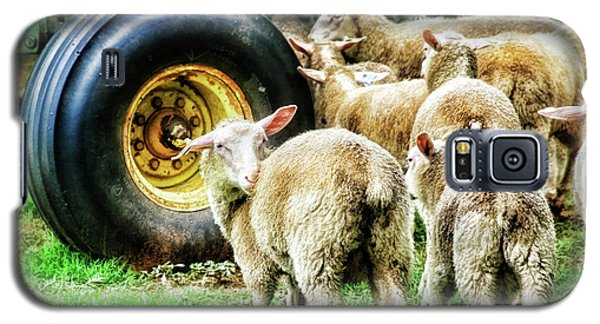 Galaxy S5 Case featuring the photograph Sheep Guards by Toni Hopper