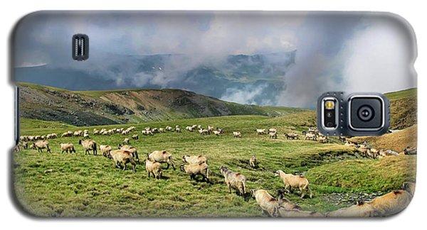 Sheep In Carphatian Mountains Galaxy S5 Case