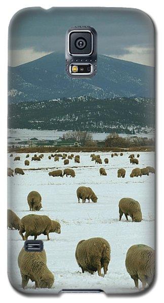 Sheep On Winter Field Galaxy S5 Case