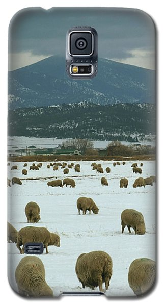 Sheep On Winter Field Galaxy S5 Case