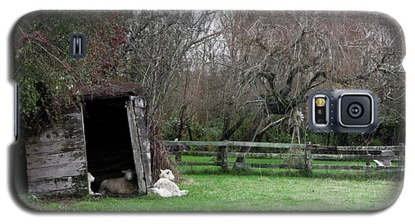 Sheep Shed Galaxy S5 Case