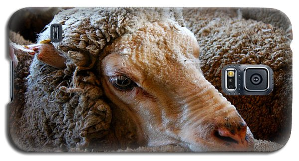 Sheep To Be Sheared Galaxy S5 Case