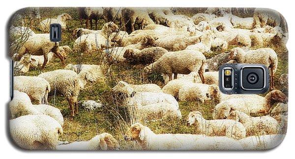 Sheep Galaxy S5 Case