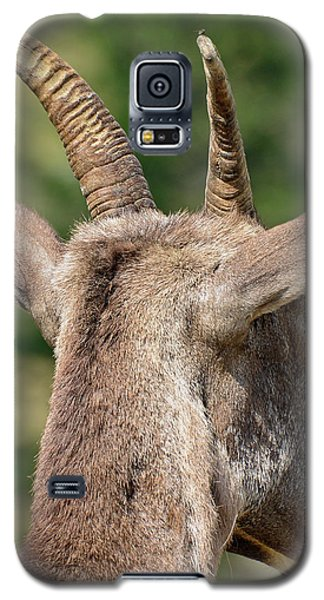 Galaxy S5 Case featuring the photograph Sheepish Look by Bruce Gourley