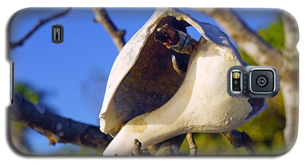 Shell On Brach Of Mangrove Tree At Barefoot Beach In Napes, Fl Galaxy S5 Case