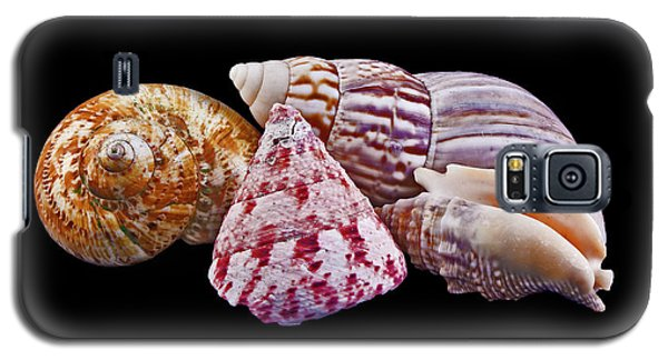 Shells On Black Galaxy S5 Case by Bill Barber