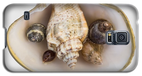 Shells Within A Sea Shell Galaxy S5 Case