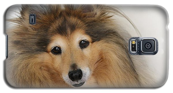 Sheltie Dog - A Sweet-natured Smart Pet Galaxy S5 Case