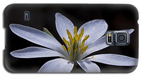 Shimmering Petals Galaxy S5 Case