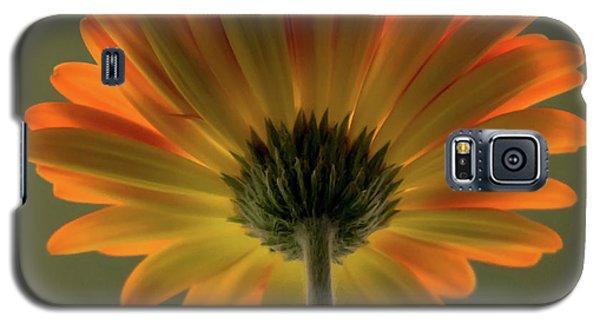 Shine Bright Gerber Daisy Square Galaxy S5 Case by Terry DeLuco