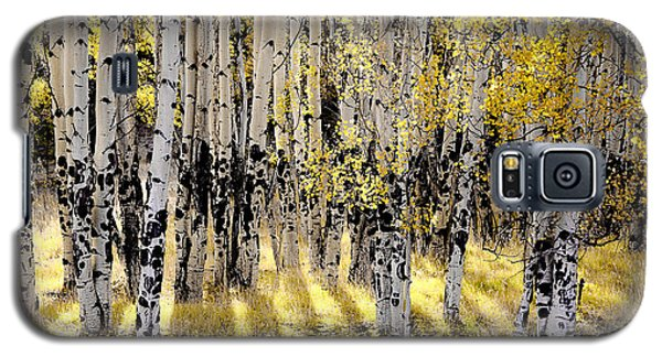 Galaxy S5 Case featuring the photograph Shining Aspen Forest by The Forests Edge Photography - Diane Sandoval