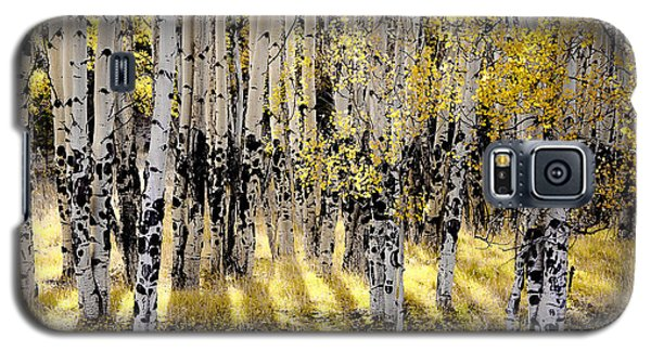 Shining Aspen Forest Galaxy S5 Case by The Forests Edge Photography - Diane Sandoval