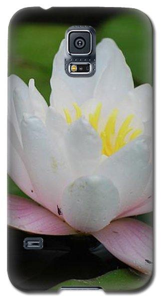 Shining Bright Galaxy S5 Case
