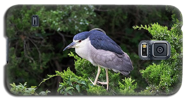 Shore Bird Roosting In A Tree Galaxy S5 Case
