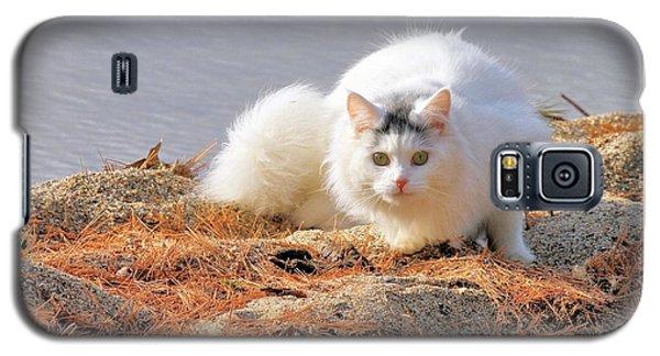 Shore Kitty Galaxy S5 Case