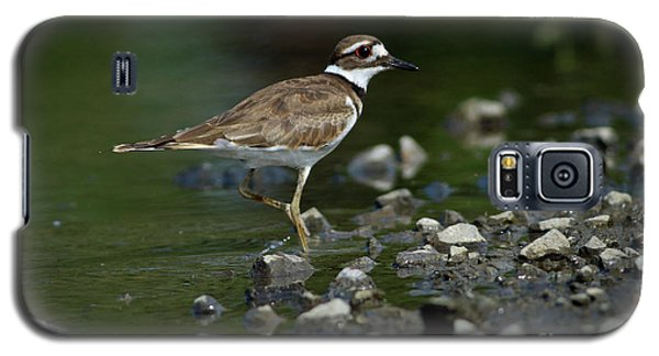 Killdeer  Galaxy S5 Case by Douglas Stucky