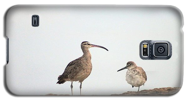 Galaxy S5 Case featuring the photograph Shorebirds Of Windansea Beach by Bruce Patrick Smith