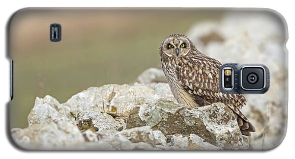Short-eared Owl In Cotswolds Galaxy S5 Case
