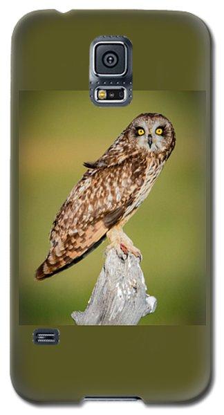 Short Eared Owl Galaxy S5 Case