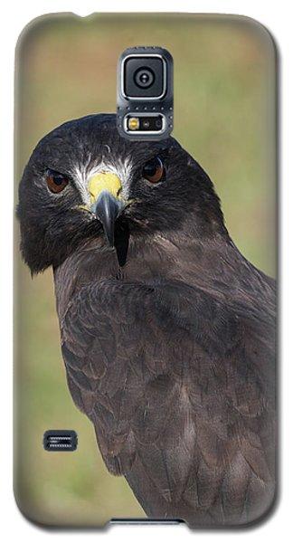 Short-tailed Hawk Portrait - Winged Ambassadors Galaxy S5 Case