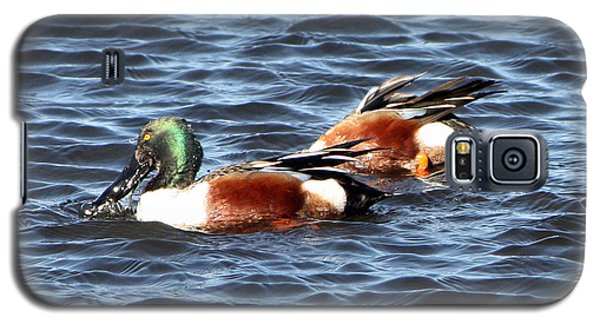 Shoveler Duck 1 Galaxy S5 Case